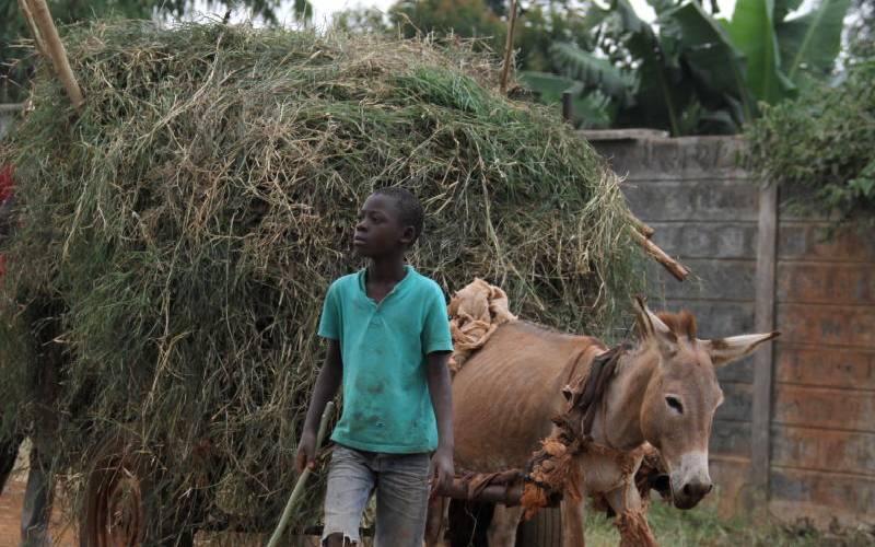 Agency to promote natural donkey breeding