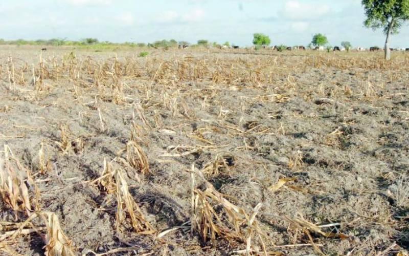 Agricultural premiums hit Sh1 billion mark