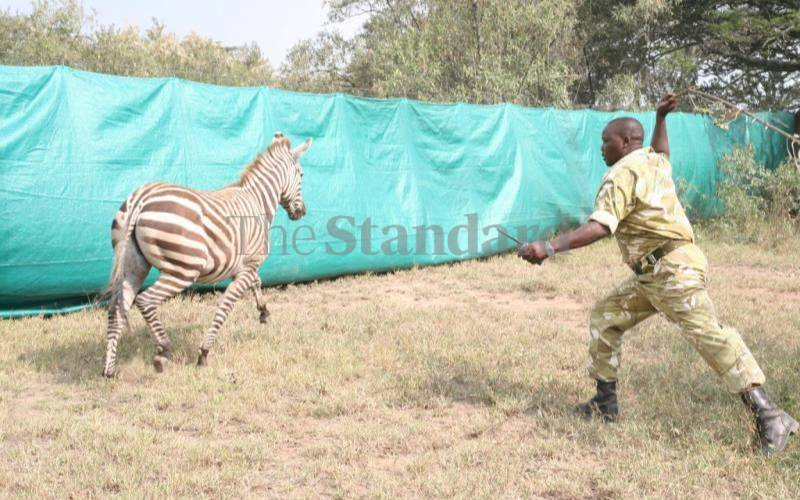 Anxiety as wildlife attacks in Naivasha intensify