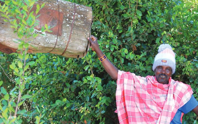 Bees in crisis: Toxic insecticides a threat to food security
