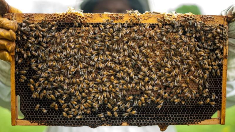 Drama as witch doctor flushes out thieves with swarm of bees