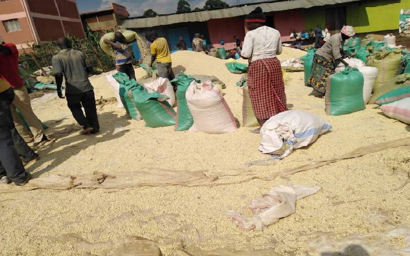 Farmers shun maize depots in pursuit of better prices