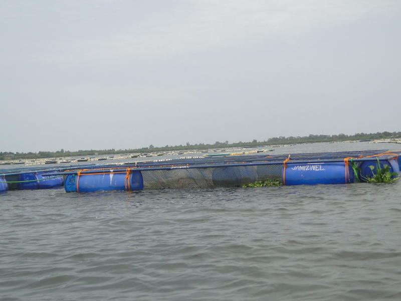 Cage fish farming in Anyanga beach, Siaya County. The swelling lake has affected the movement, feeding and growth of fish. (Photo: Isaiah Gwengi).