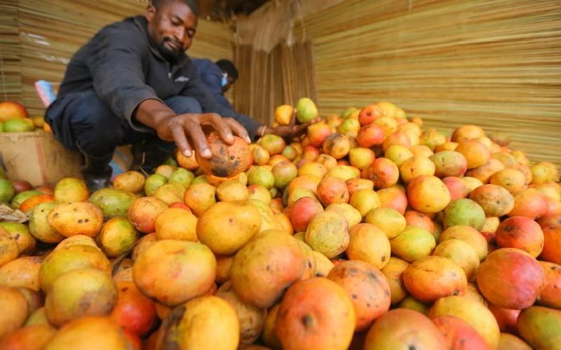 Kenya set to resume mango exports to EU