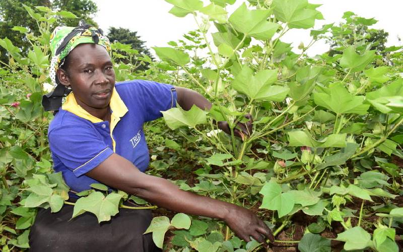 Lack of seeds curtail uptake of Bt cotton