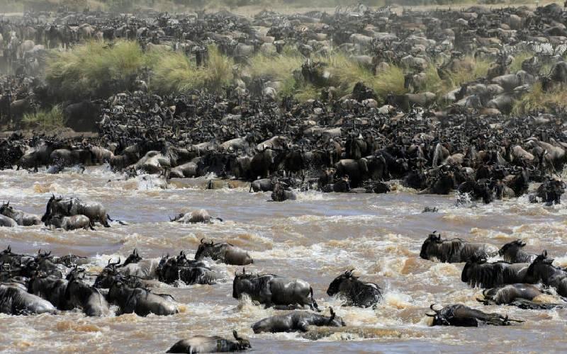 Maasai Mara roars back to life ahead of wildebeest migration