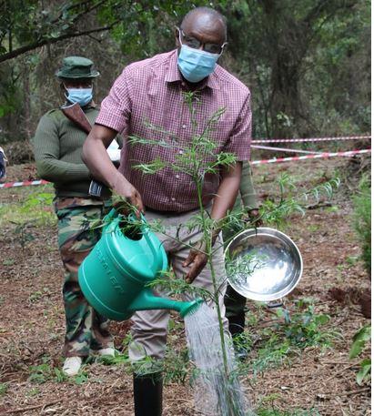 Principal Secretaries underscore role of tree in economy