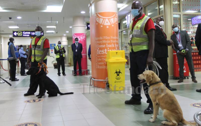 Sniffer dogs detecting Covid-19 cases at airports
