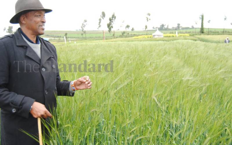 State bars millers from importing wheat, prices up to Sh3,700 per bag