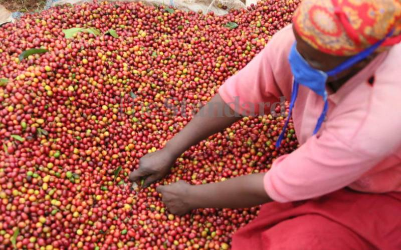 The rise of local women farmers in Kenya's coffee sector