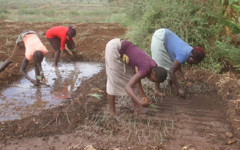 Time's ripe for Kenya to adopt food safety standards