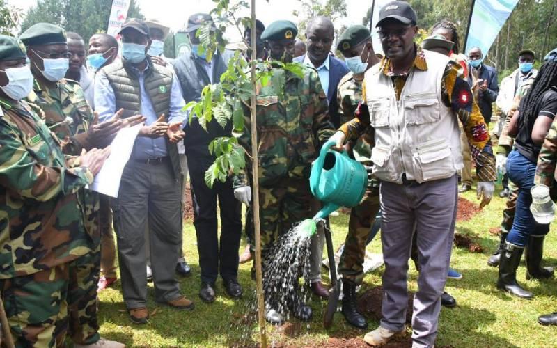 350,000 seedlings to be planted in Kaptagat annual tree planting