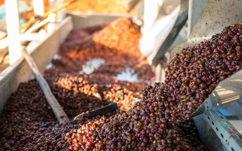 Coffee farmers to sell direct to South Korea