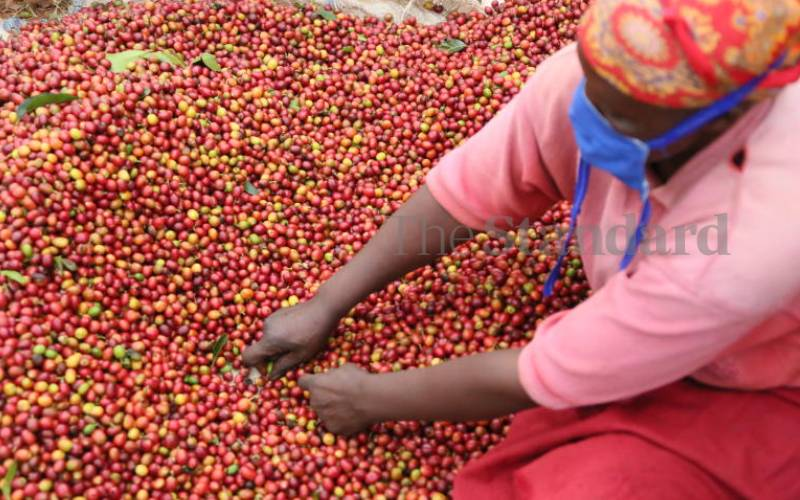 Coffee reforms off to shaky start as MPs pull in different directions
