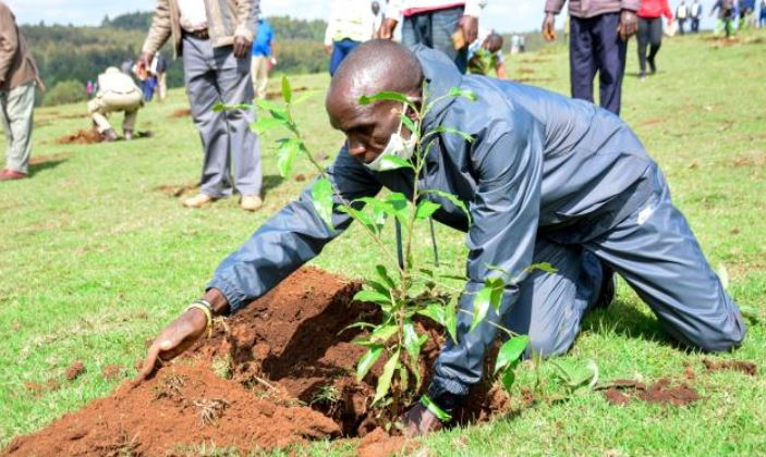 Coronavirus crisis push race organisers to plant trees