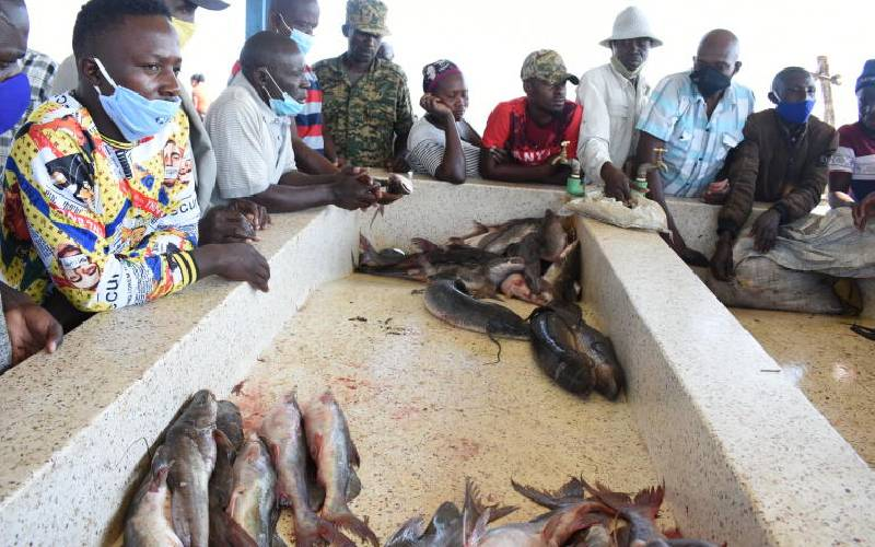 How fish auction has streamlined the trade in L Edward