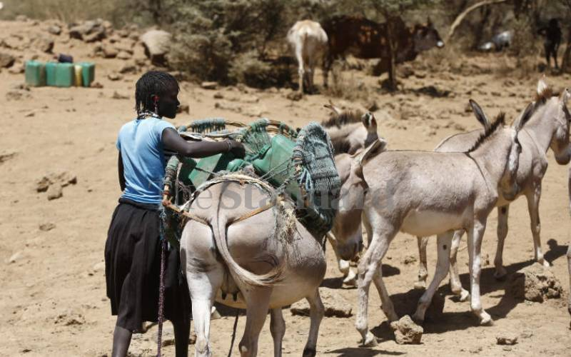 How global demand for donkey skins is hurting women