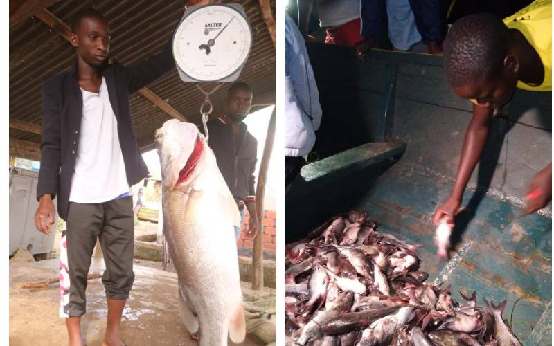 How to make fisheries sector profitable