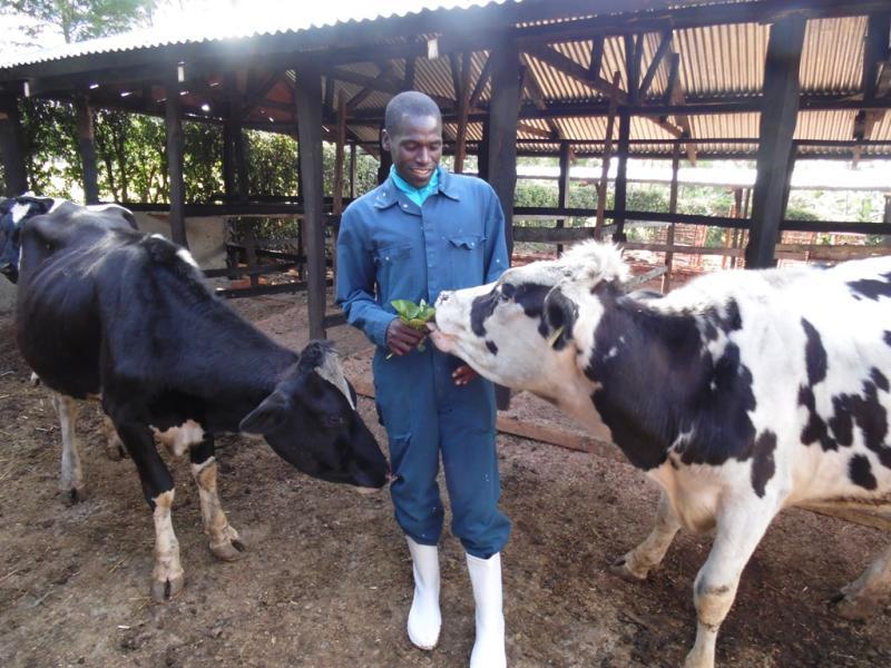 Kipsiele cries over spilt milk as virus causes more disruption