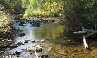 Manage riparian zones responsibly