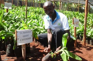 Pastor Paul Njiru turns unproductive coffee farm into lucrative banana plantation