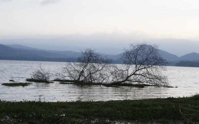 Rising water levels at lake Naivasha lead to decline in pollution, experts say