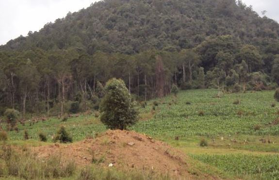 Shamba system to be reviewed