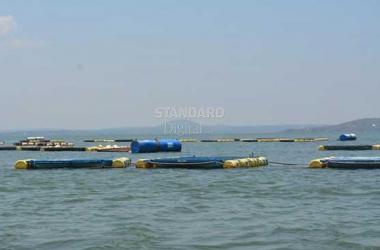 Tech savvy granny turns scary Lake Victoria into floating fish paradise