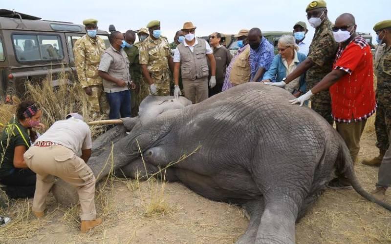 Tembo Naming Festival held, rising elephant numbers lauded