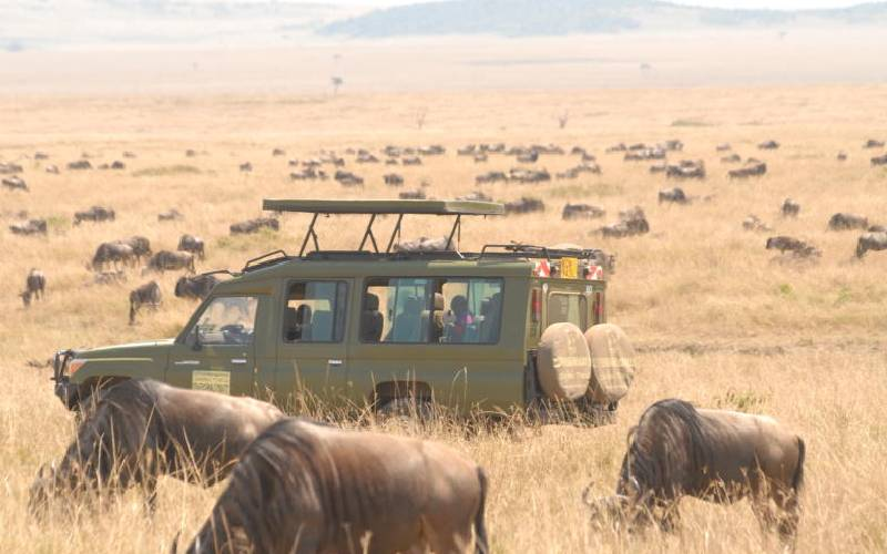Wildebeest migration: The river crossing that dwarfs the rest
