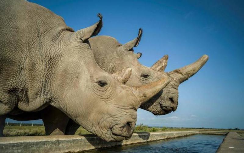 Kenya marks World Rhino Day with conservation milestones to show