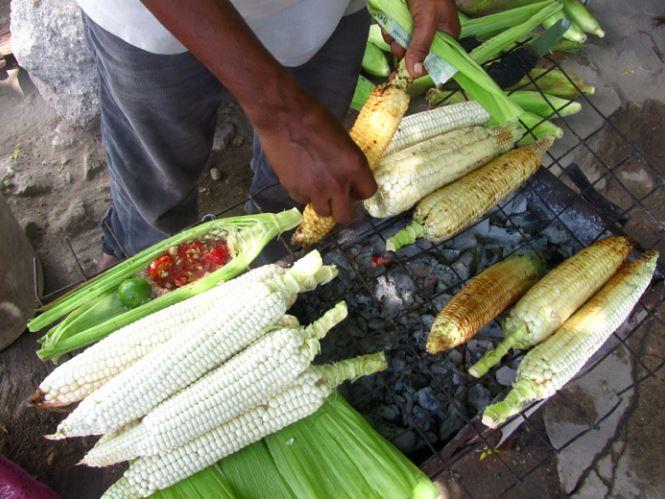 Maize scam that runs a hundred years deep