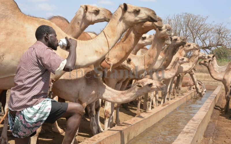 200,000 families affected by drought to benefit from cash transfer