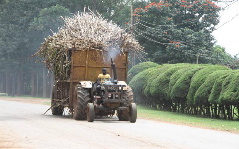 Ailing sugarcane and peek into Brazil, Tanzania magic