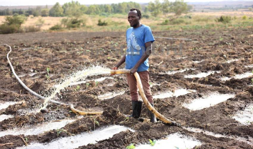 Athi River and its contaminated vegetables