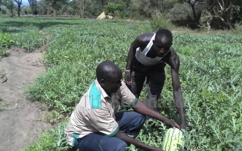 Bandits attack, kill Kerio Valley's multi-million fruit farming mentor