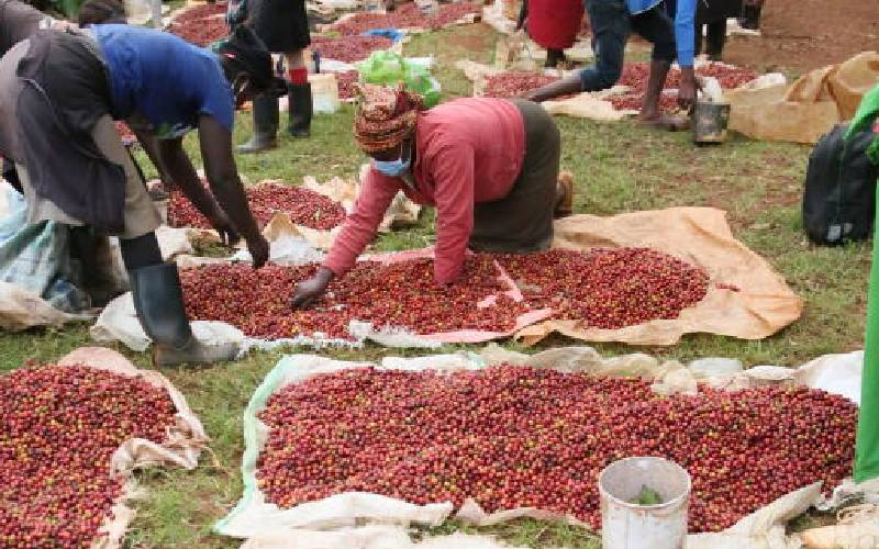 Coffee farmers soldier on despite troubles