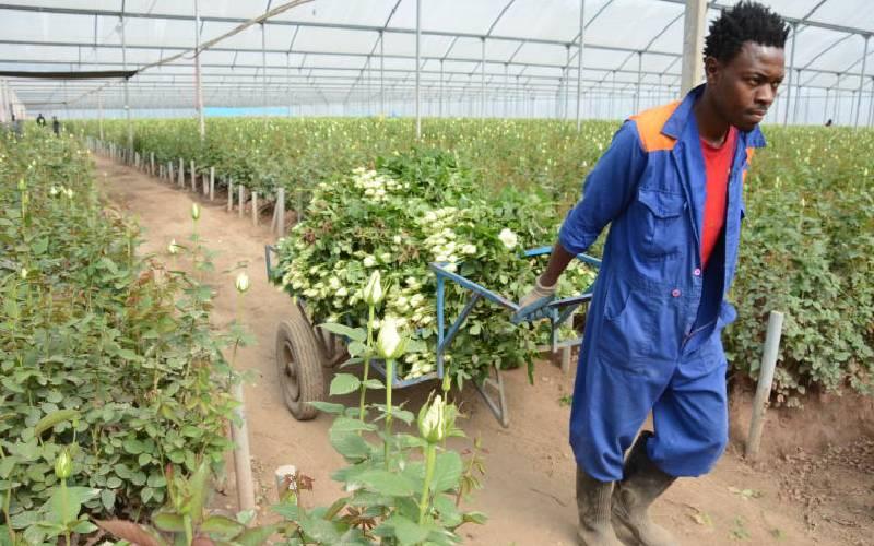 Cotu okays sacking of 50,000 farm workers