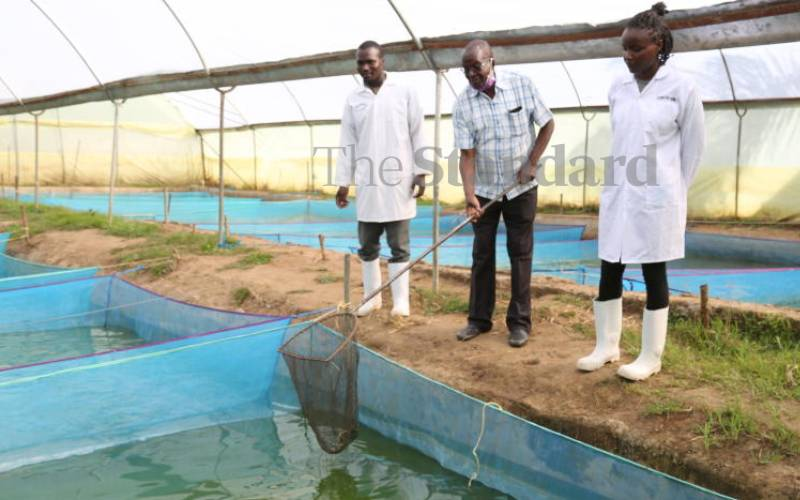 Counties to benefit from Sh25 billion 5-year small-scale fish farming project