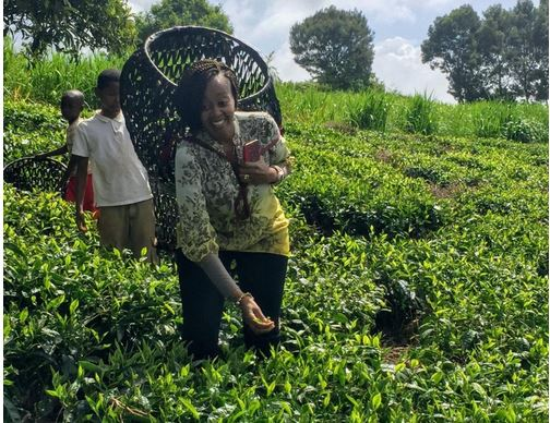 Defying odds to build a healthy tea brand