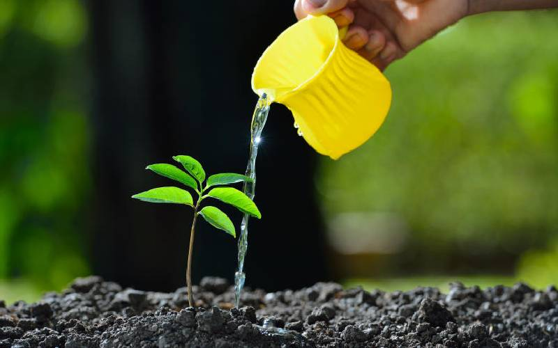 Digging into how tree planting should be done