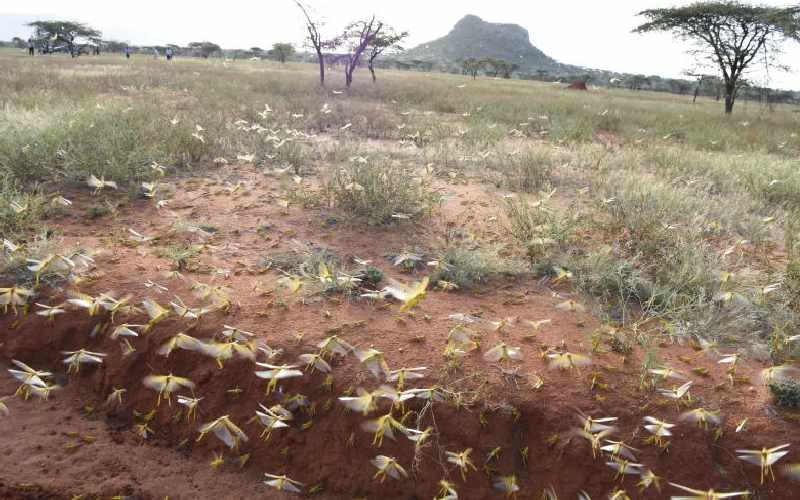 FAO warns of dire famine as more locusts invade