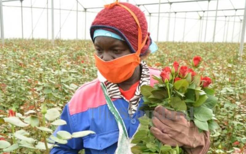 Flower farms face turbulence as more companies close down