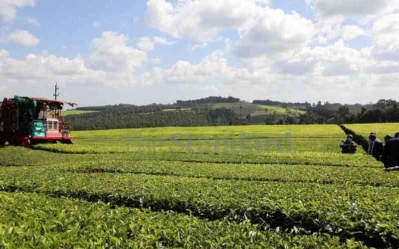 Former James Finlay tea workers move to Scottish court over injuries