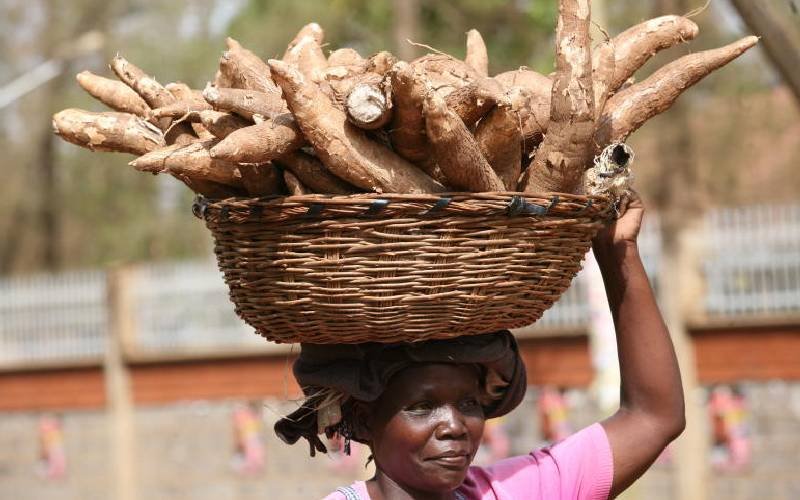 How to make 10 times more from five cassava tubers