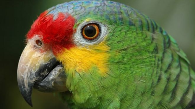 Hubby's friend dumped parrot in our home, wife tells court