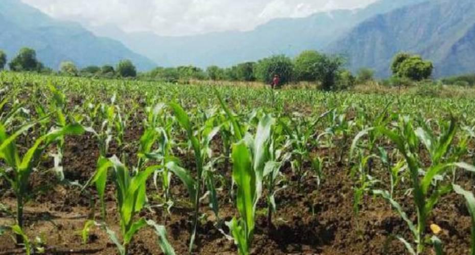 Kenya Seed Company warns of fake seeds in market