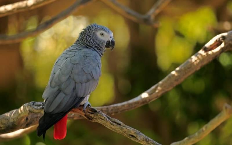 Parrots, owls sold online for herbal medicine
