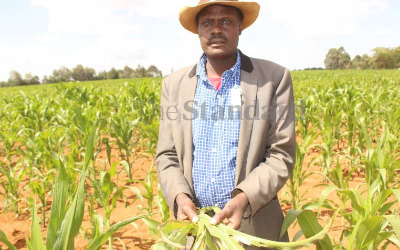 Poor rains leave maize farmers counting losses, country at risk  of starvation
