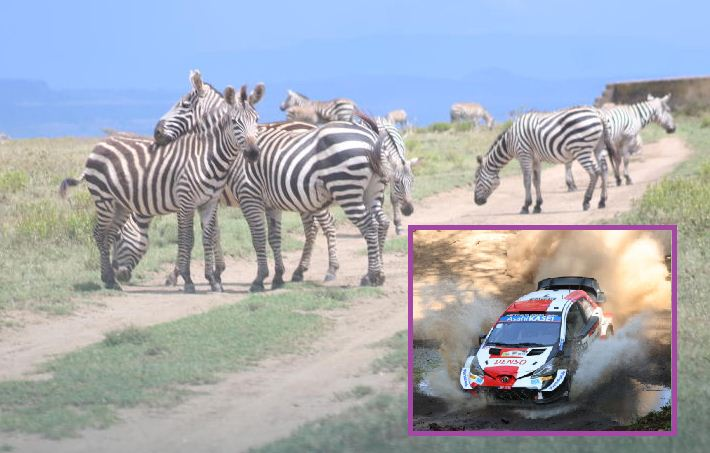 Safari Rally: WRC drivers marvel at Kenya's flora and fauna